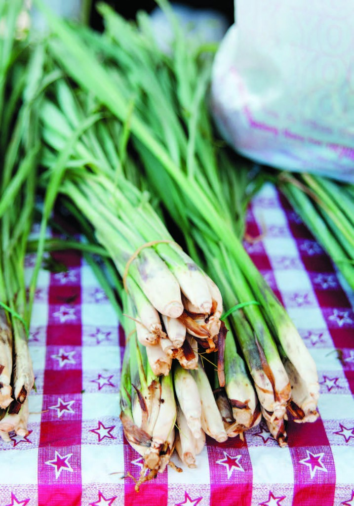 Lemongrass, a widely used herb in Asian cuisine.