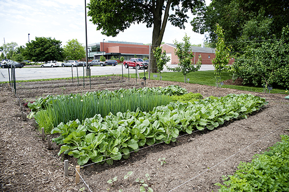 "Metropolitan Community College's Institute for the Culinary Arts, in the background, is just steps away from the bistro's garden. The garden has given new meaning to the term ""local food,"" allowing culinary students to learn with the freshest of ingredients."