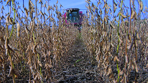"Many of the food-themed documentaries challenges the established food culture of the so-called ""Western diet,"" with particular scrutiny given to the unholy (or unhealthy?) triad of fast food, industrialized agriculture and agribusiness. Large-scale soybean harvesting is shown here.  (Photo courtesy of Magnolia Pictures)"