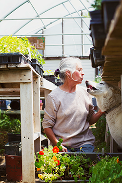 Lucy, Rebecca Bloom's white shepherd, seeks a shady spot under a potting bench, near the nasturtiums.