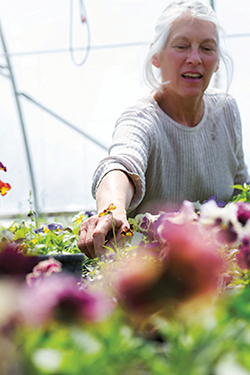 Rebecca Bloom shows off a variety of pansies. The flowers can garnish (and be safely eaten) with desserts or candied for decoration.