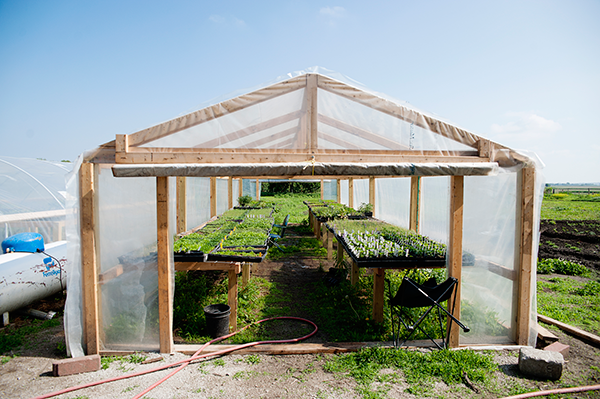 One of the farm greenhouses abundant with growing seedlings.