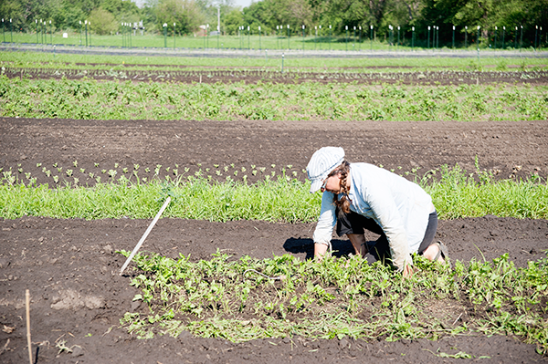 Terra Hall begins the replanting process after the severe storm on June 3 devastated their crops.