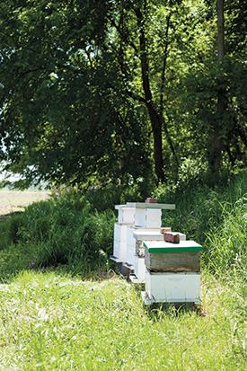 In a field at Duda Farm, several hives house bees so that they may construct colonies and produce honey. They have hives in separate places on and off the farm with multiple harvests planned.