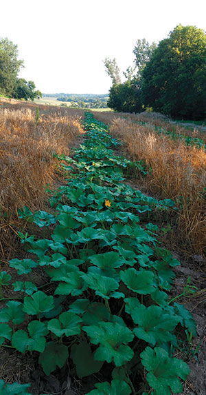 A pumpkin patch on the Young People's Farm in late summer. Photo by Joe Driscoll
