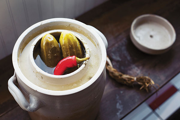 Heirloom pickling cucumbers are submerged in a salt water brine with fresh dill, garlic and hot peppers. A piece of cherry bark is added to keep the vegetables safely submerged under the surface.