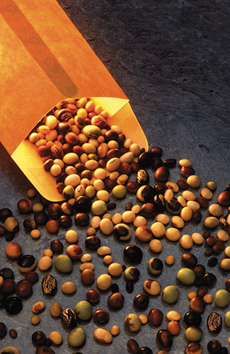 A hundred years ago, soybeans were nearly unheard of in the United States: Only a handful of innovative farmers raised them. This collection of seed soybeans, from the National Soybean Germplasm Collection housed at Urbana, Illinois, shows the wide range of soybean colors, sizes and shapes grown in the U.S. today. (Photo by Scott Bauer, USDA Image Number K5267-7)